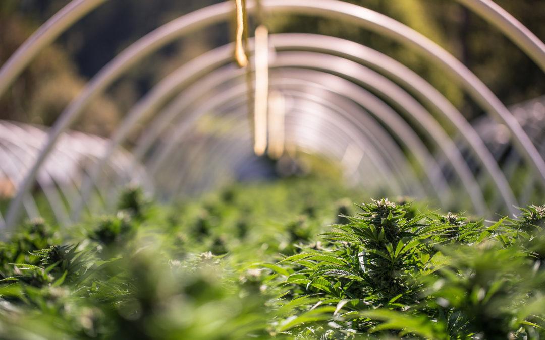RI Governor Announces Recreational Marijuana Legislation Forthcoming